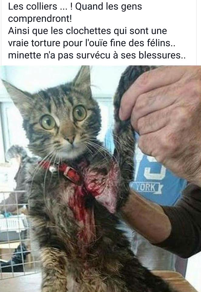 collier chat accident